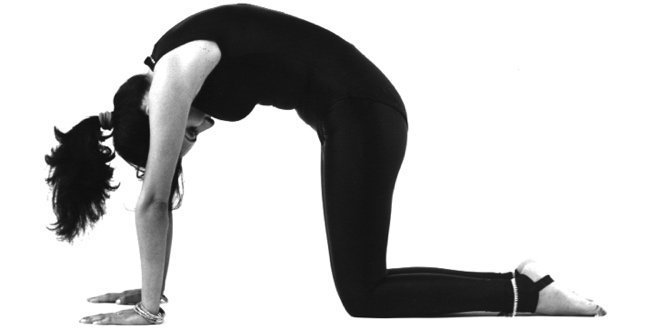yoga cat posture